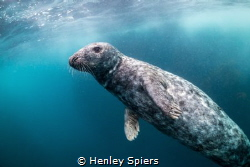 First Seal Encounter by Henley Spiers