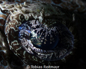 Crocodilefish eye by Tobias Reitmayr