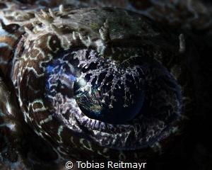 Crocodilefish eye by Tobias Reitmayr