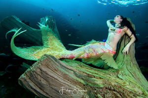 Mermaid Celine, TODI, Belgium by Filip Staes