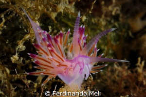 underwater jewel by Ferdinando Meli