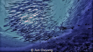 barracuda by Jun Ouyang
