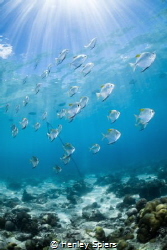 Diamondfish Dash by Henley Spiers