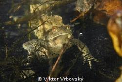Love by Viktor Vrbovský
