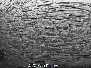 Fishiness of Fish