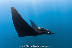 Black Mantas of La Reina, La Paz by Nick Polanszky