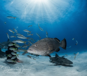 While at Tiger Beach in the Bahamas, we generally keep al... by Debbie Wallace
