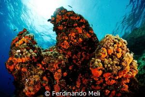 Underwater colors by Ferdinando Meli
