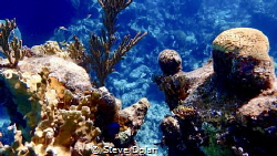 """""""Natural Beauty"""". Snorkeling off the Southern coast of Na... by Steve Dolan"""