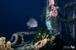 On the wreck of the Toho 5 by Mathieu Macias