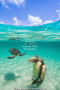 """Vertical Defense"" - A pair of mating green sea turtles t... by Susannah H. Snowden-Smith"