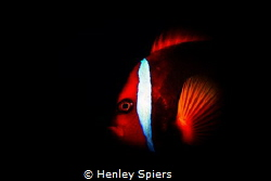 Dark Side of the Clownfish by Henley Spiers