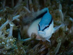 blue-white by Marc Van Den Broeck