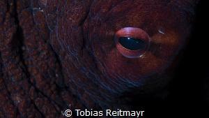 Octopus at night by Tobias Reitmayr