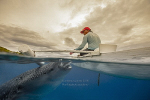 Whale Shark and Feeder by Wayne Jones