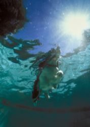 Hunter the Aqua-Dog, taken in pool while doing camera tes... by Andrew Dawson