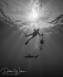 I happened to catch this diver and lone silky shark with ... by Debbie Wallace