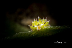 A Sheep nudi. By sony 6500. by Qunyi Zhang