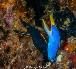 Black & Blue by George Touliatos