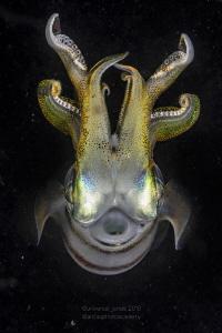 Squid by Wayne Jones