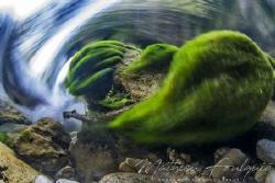 freshwater swirl (Dourbie river - France) by Mathieu Foulquié