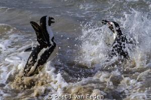 Penguin Splatter by Peet J Van Eeden