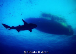 Man vs Wild / Shot from this years visit to Maldives. Div... by Shinto K Anto