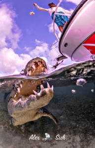 Overunder of an American Crocodile Up Close by Alex Suh