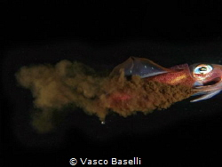 """Hasta luego"" said this squid before disappearing into th... by Vasco Baselli"