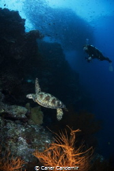 Sea Turtle and diver on Reef by Caner Candemir
