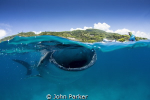 Whale Shark and boat by John Parker