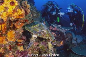 Look! by Peet J Van Eeden