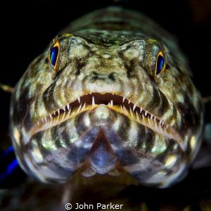 Lizardfish by John Parker