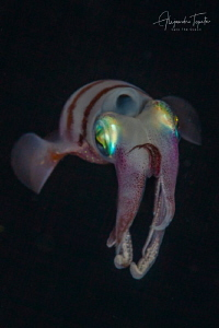 Squid in the Dark, Gardens of the Queen Cuba by Alejandro Topete