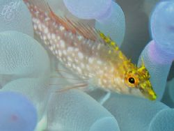 """""""What a little Diamond!"""" from Grand Cayman with Canon A70... by Brian Mayes"""