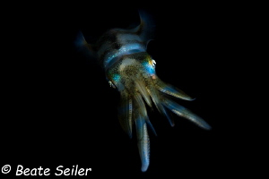 Squid on a night dive by Beate Seiler