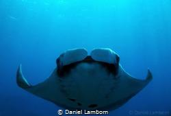 Amazing Manta encounter at Caño Island, on the Pacific si... by Daniel Lamborn