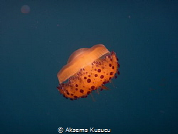 mediterranean jelly fish by Aksems Kuzucu