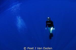 Free diver in the deep blue water  30 km off the Cape Pen... by Peet J Van Eeden