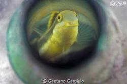 I swim in my bathtub... by Gaetano Gargiulo