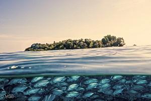 Sipadan island. by Mehmet Salih Bilal