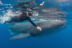 Roger and Whaleshark, Isla Contoy México by Alejandro Topete