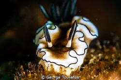 Nudie Grazing!!! by George Touliatos