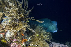 The locals advised us to dive early if we wanted to see t... by Hani Omar