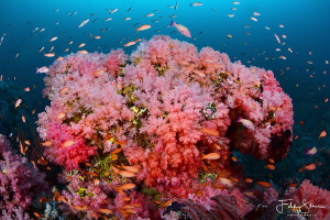 """Pink garden"", Puerto Galera, The Philippines. by Filip Staes"