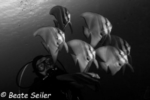 My Buddy and the friendly Batfish B/W by Beate Seiler