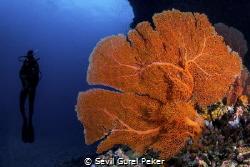 Maalhos Thila site full of soft corals at 20_24 meters by Sevil Gurel Peker