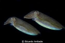 Underwater Spaceships by Eduardo Arribada