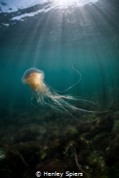Jellyfish Dancer by Henley Spiers