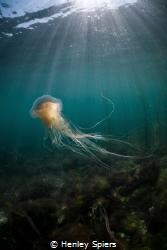 Jellyfish Dancer by Henley Spiers